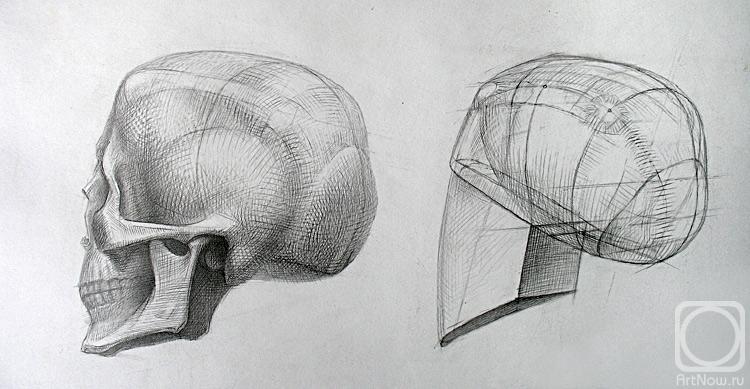 Череп анатомия рисунок художника