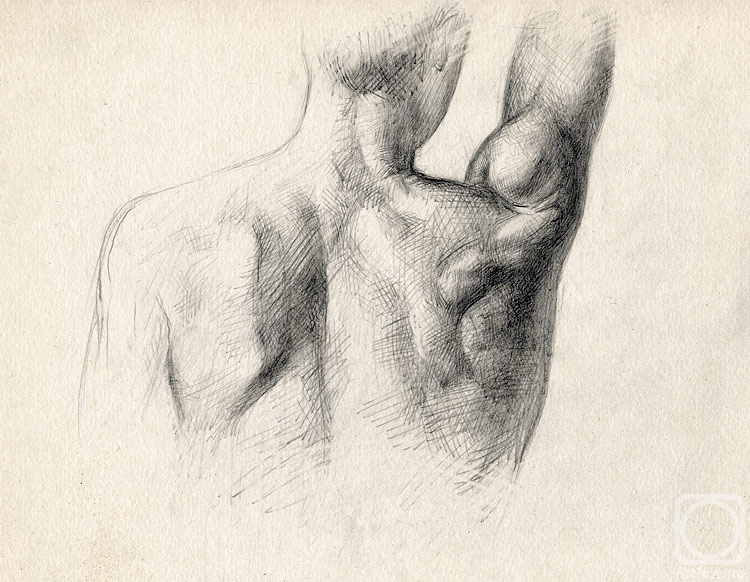 Painting «Muscles of the back» — buy on ArtNow.ru