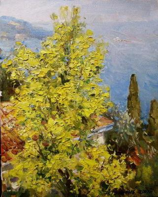 Galimov Azat. The Island of the Prince. Flowering mimosa