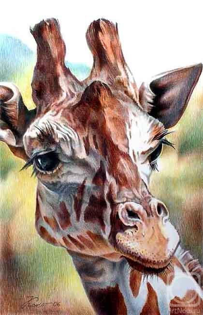 Константин Павел. Жираф 2