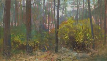 Sunset in Pine Forest. Autumn. Chernov Denis