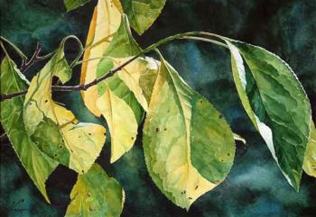 Sun in plum leaves