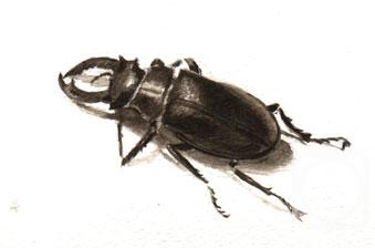 Краснова юлия жук рогач