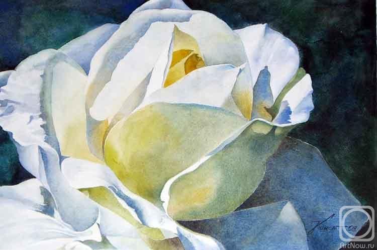 Константин Павел. Роза