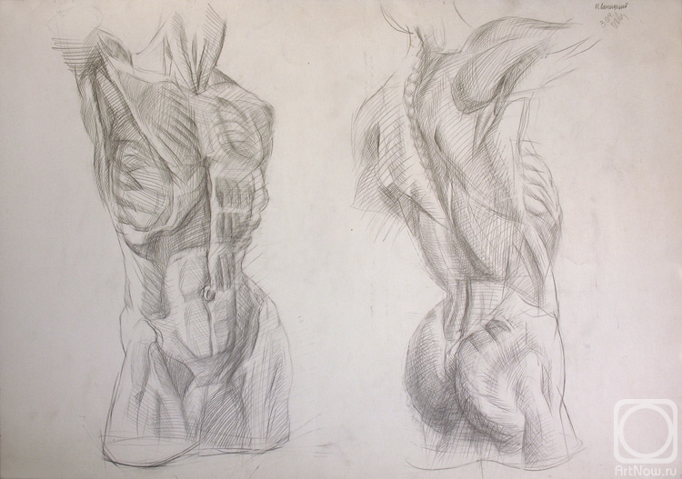 Painting «Male torso. Muscle structure» — buy on ArtNow.ru