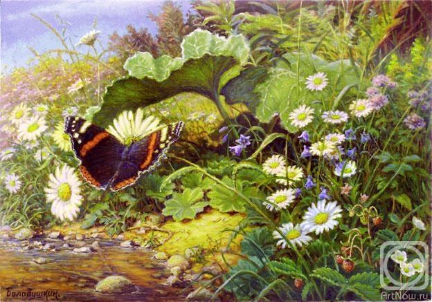 Балабушкин Сергей. Травки в лесу