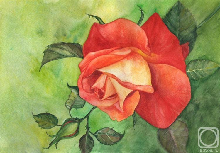 Красные розы нарисованные гуашью