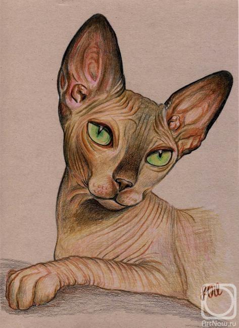 Кот сфинкс арты