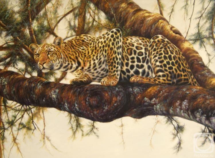 Бруно Августо.  Леопард.