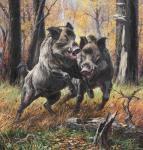 Кабаны, свиньи