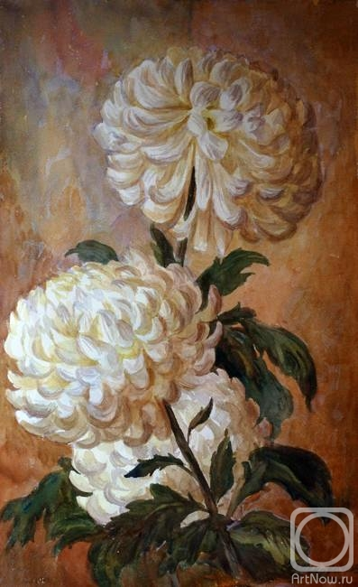 Краснова юлия белые хризантемы
