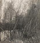 Никиреев Станислав. Старое гнездо сороки