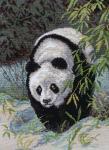 Панда. Храпкова Светлана