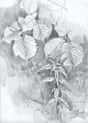 Foliage of the Hazel. Yudaev-Racei Yuri