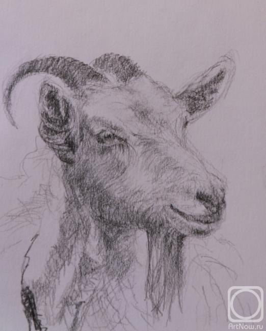 Фаттахов Марат. Портрет козы